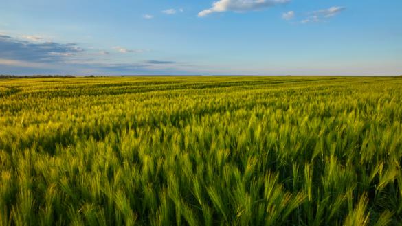 impatto-ambientale-cibo