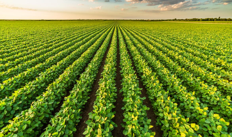 L'agricoltura di precisione: un approccio moderno e sostenibile nella coltivazione 4.0